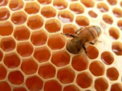 Sociedad de abejas